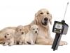 определение овуляции у собак эструс течка дата спаривания собак наилучший метод тихая течка тест на прогестерон когда