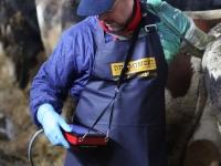 iScan2 - zarządzanie rozrodem bydła