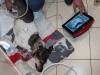 4vet-slim, batteriebetriebenes Ultraschallgerät für Diagnostik in allen Umständen