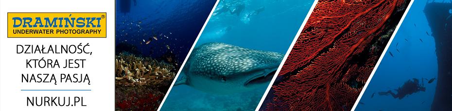 Zachwycające, podwodne pejzaże widziane obiektywem właściciela firmy DRAMIŃSKI. Sprawdź!