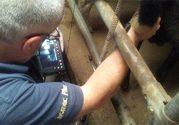 Kurs reprodukcji kóz i owiec na ultrasonografach iScan i 4Vet mini