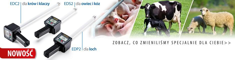 Nowoczesne wykrywacze rui w hodowli zwierząt_DRAMIŃSKI ED2